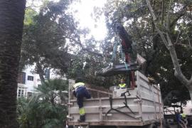 La estatua de Antoni Maura regresará a la Plaça del Mercat