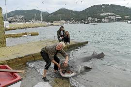 Aparece un tiburón muerto en Andratx
