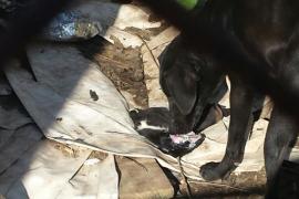 Denuncian las condiciones en las que viven unos perros en Consell