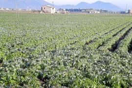 Los agricultores protegen las patatas con el riego como medida de prevención