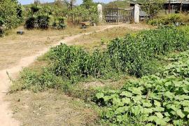 IBIZA AGRICULTURA ECOLOGICA