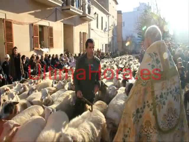 Desfile de animales en Muro