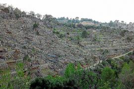 Unas quince fincas de Sóller y Fornalutx recuperan el olivar