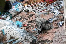 La policía interviene en el domicilio donde vivían unos perros entre basura