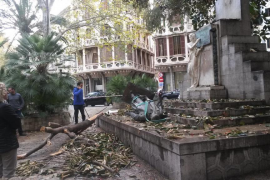 Cort inicia la retitrada de los palmitos de la Plaça del Mercat