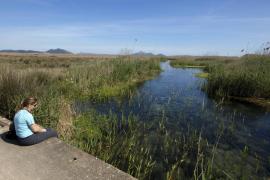 El GOB denuncia la desprotección de s'Albufera  ante el secretariado del Convenio de Ramsar