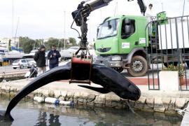 Muere un cetáceo varado en el puerto deportivo de Addaia
