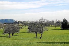 El Ajuntament de Inca da el visto bueno a la variante propuesta por el Consell