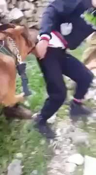 Publicado un vídeo en el que soldados israelíes amenazan con perros a un joven palestino