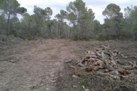 El GOB denuncia el impacto de una tala de árboles y el bloqueo de un camino público en Algaida