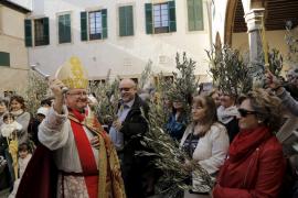 Ramas de olivo y palmas, protagonistas del Domingo de Ramos