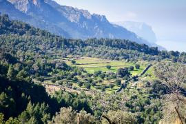 El Consell cancela el congreso de la Serra por temor a una impugnación