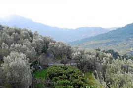 El Govern bloquea de forma definitiva la instalación de parques eólicos en la Serra