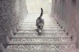 El gato ¿sube o baja?