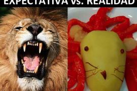 Los mejores 'memes' del 'león come gamba'