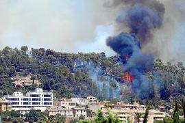 Las zonas urbanas cercanas a pinares deberán tomar medidas contra incendios