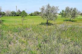 El TSJB obliga al Algaida a expropiar los terrenos anexos a es Porrassar