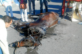 La calesa del caballo que se desplomó tiene 14 expedientes
