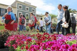 El buen ambiente y el aroma floral reinan en Costitx