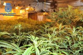 La Policía Nacional desmantela una plantación de marihuana en Lloret