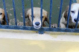 Son Reus espera que la dueña renuncie a los perros para darlos en adopción