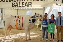 Menorca impone su poderío vacuno