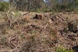 El GOB pide la retirada de los restos forestales en la finca de Castellitx en Algaida