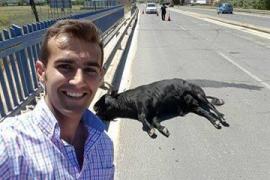 Críticas al torero Sergio Blasco por fotografiarse con el toro atropellado