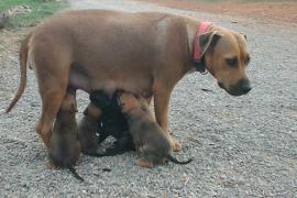 Campaña de esterilización animal para todos los bolsillos