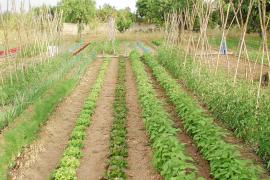 Las trabas del Govern ponen en peligro las 30.000 hectáreas de agricultura ecológica