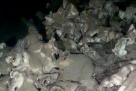 Descubren un arrecife de sílice construido por esponjas roca entre Ibiza y Valencia