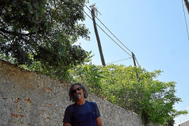 Muere la palmera de Can Bescaí, catalogada por su récord de altura