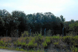 El Govern ultima la desclasificación de siete zonas cartografiadas en 2001 como encinares protegidos