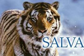 'Salvajes', en el Passeig Sagrera