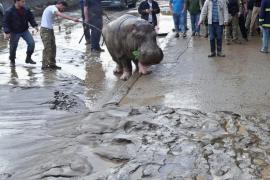 La inundación de Tiflis deja doce muertos y varias fieras escapadas de un zoo