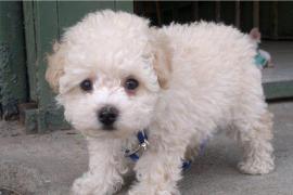 Buddy, el cachorro atrapado en El Prat, podrá entrar tras una cuarentena