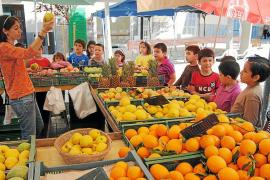 Manacor presenta un ambicioso plan para revitalizar la plaza de ses Verdures y su entorno