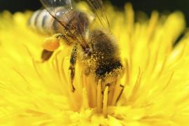 Conferencia 'Canvi global i abelles' en Sa Riera