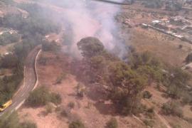 Controlado un incendio forestal en Son Anglada