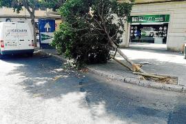 Una furgoneta pierde el control y arremete contra un árbol en la plaza de Es Fortí