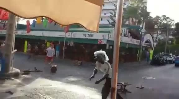 Batalla campal en la calle del Jamón