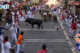 Un toro adelantado de la manada crea peligro en el tercer encierro de los Sanfermines