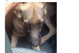 La Guardia Civil de Balears tuitea el rescate de un cachorro que busca hogar