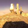 Una gaviota 'roba' una cámara y graba el paisaje de las Islas Cíes