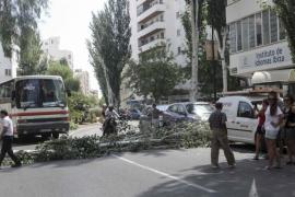 Un árbol cae en plena avenida Isidor Macabich