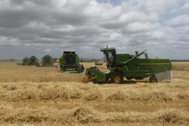 Las cosechadoras baten el Pla