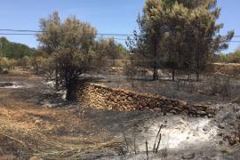 El GOB pide que se prohíba cazar en zonas incendiadas