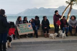 El Seprona investiga la muerte de otro perro en una playa del Port de Pollença