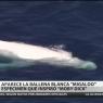 Una ballena blanca sorprende a un grupo de turistas