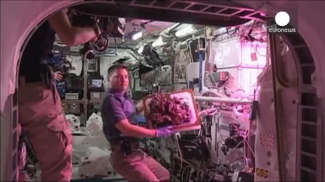 Los astronautas de la EEI disfrutan de la primera lechuga espacial